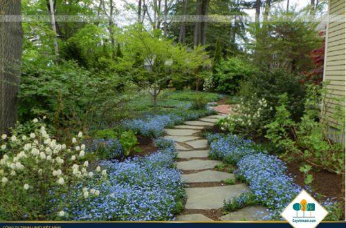 Lối đi trong sân vườn đẹp