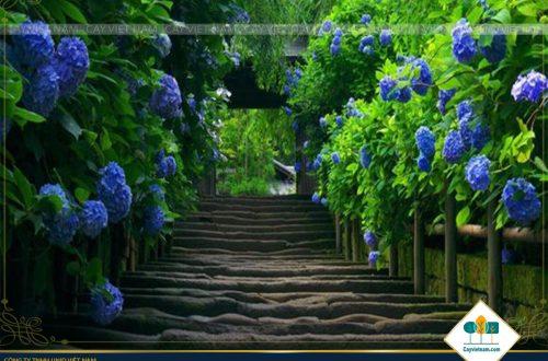 Vẻ đẹp của hàng rào và cây hoa